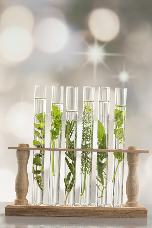 Fresh herbs in test tube royalty free stock photography