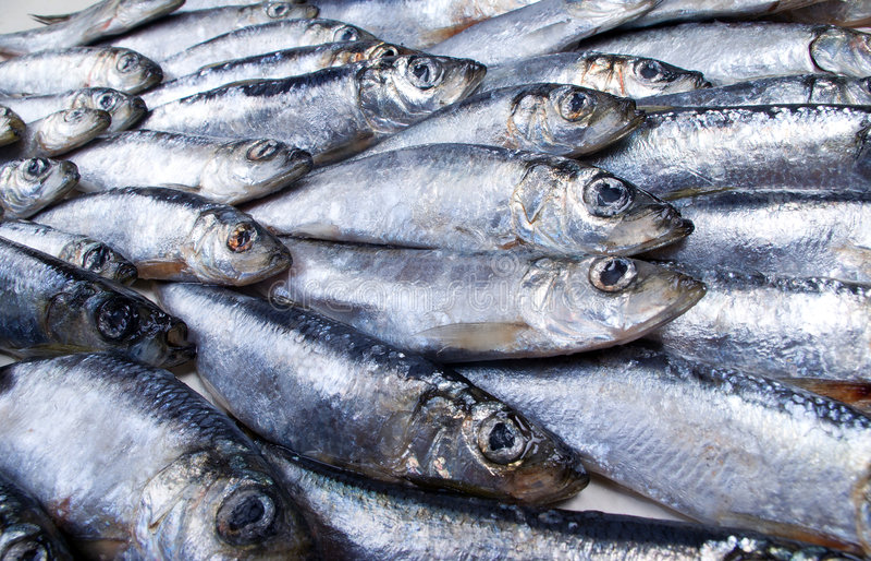 Fresh herring Close-up royalty free stock photography