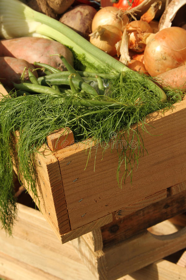 Fresh home grown vegetables in a wooden box. A selection of fresh home grown vegetables in a wooden delivery box royalty free stock photo