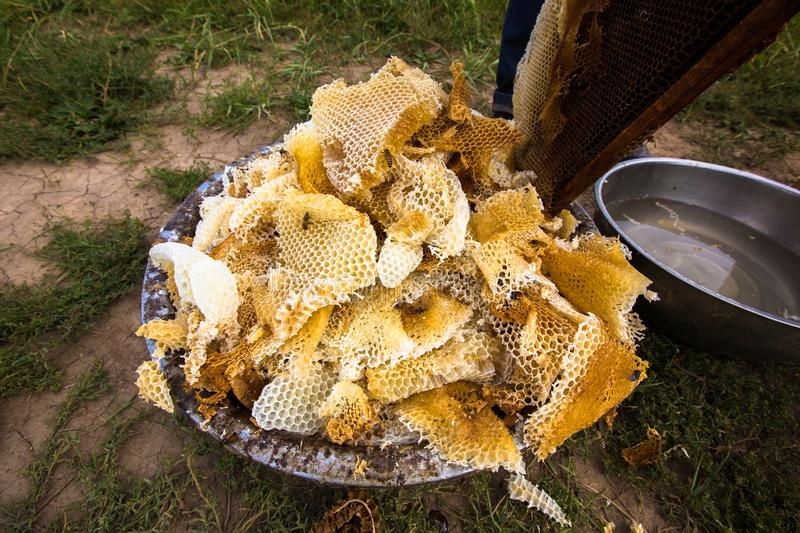 Raw Honey Still in the Combs royalty free stock photos