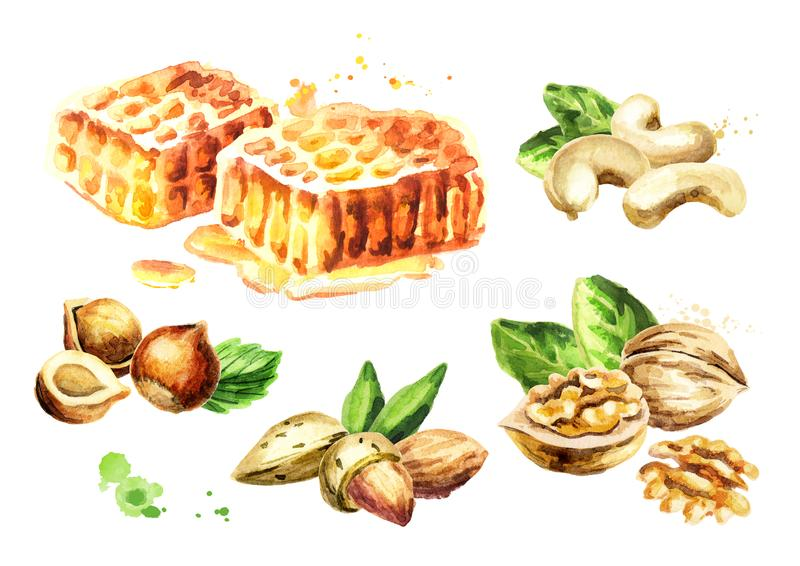 Fresh honeycomb and different kind of nuts set. Watercolor hand drawn illustration. royalty free illustration