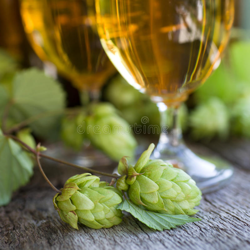 Fresh hops. Fresh beer and hops on wooden ground royalty free stock photo