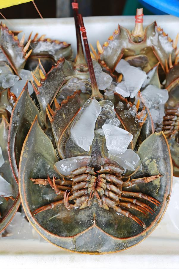 Fresh horseshoe crab on ice at market stall in Thailand.  royalty free stock images