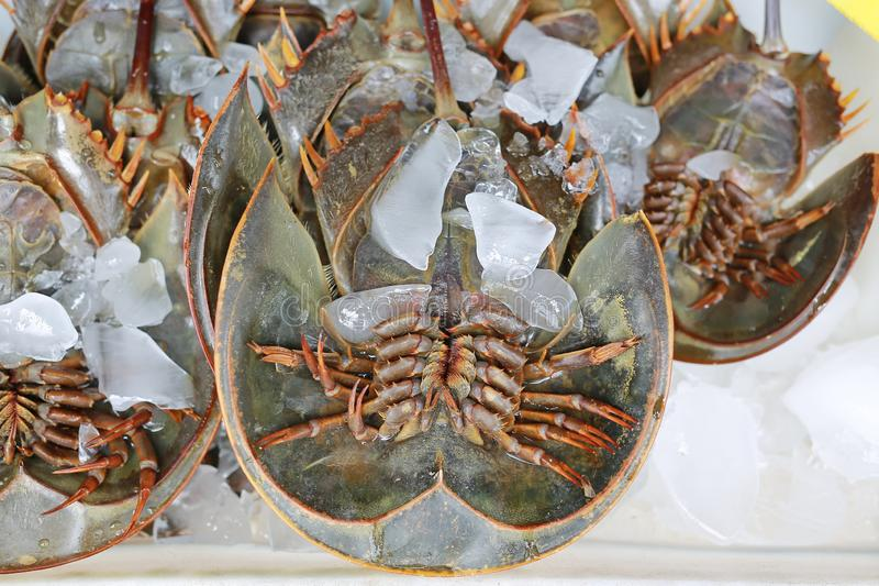 Fresh horseshoe crab on ice at market stall in Thailand.  stock photography