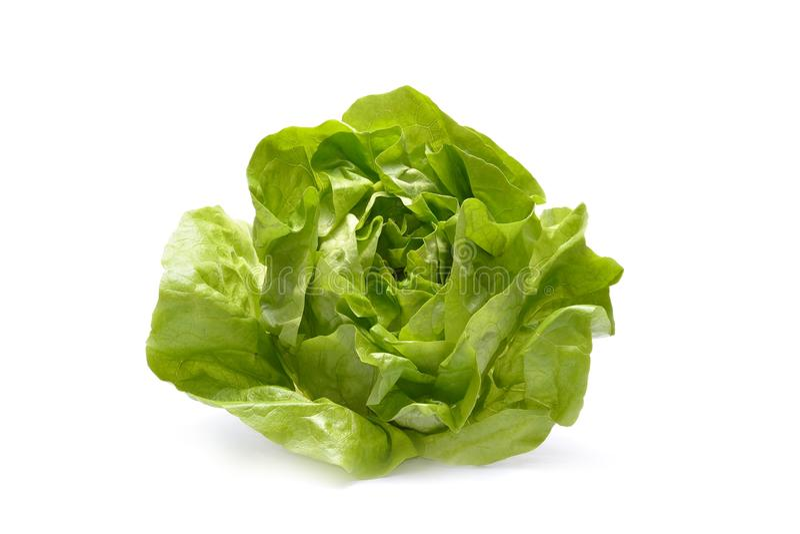 Fresh iceberg salad royalty free stock photography