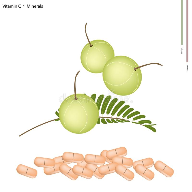 Fresh Indian Gooseberry with Vitamin C and Minerals. Healthcare Concept, Illustration of Ripe Indian Gooseberry with Vitamin C and Minerals Tablet, Essential royalty free illustration