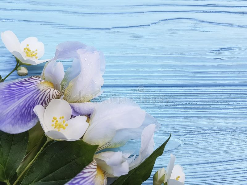 Fresh iris blossom beauty elegance flower on a blue wooden background. Fresh iris flower beauty blossom a blue wooden background elegance stock images