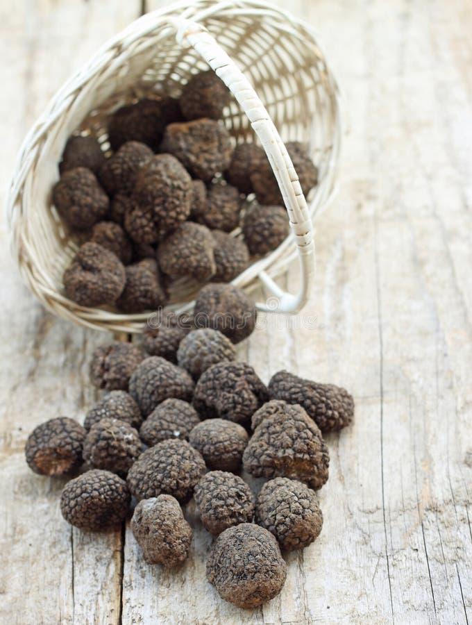 Fresh italian truffles. Fresh italian truffkes from Norcia city royalty free stock image