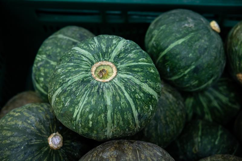 Fresh Japanese pumpkins. A close-up group of fresh green japanese pumpkins at the supermarket in Thailand royalty free stock image