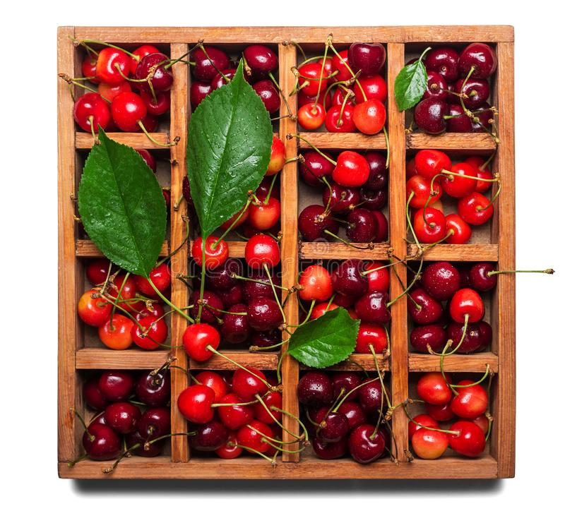 Fresh juicy berries cherries and leaves in wooden box with cells isolated on white background. Fresh juicy berries cherries and leaves in a wooden box with cells royalty free stock photos