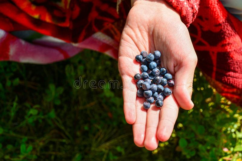Fresh, juicy berries of forest blueberries in the palm of your hand. The concept of health, vitamins, benefit for vision stock images