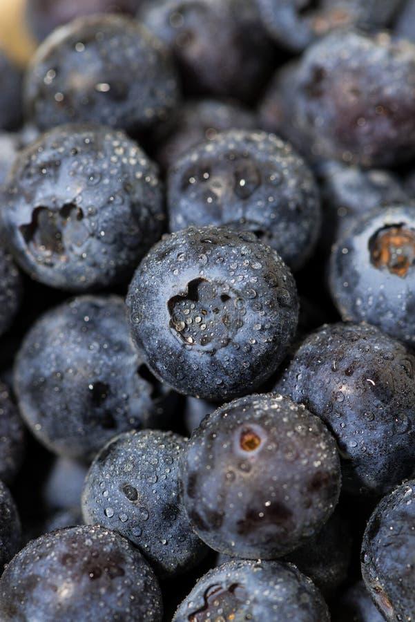 Fresh juicy blueberries, closeup vertical royalty free stock photo