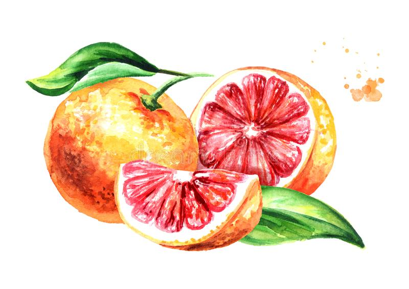 Fresh juicy grapefruit with half, slice and leaf. Watercolor hand drawn illustration, isolated on white background stock illustration