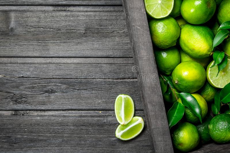 Fresh juicy lime in the box royalty free stock photos