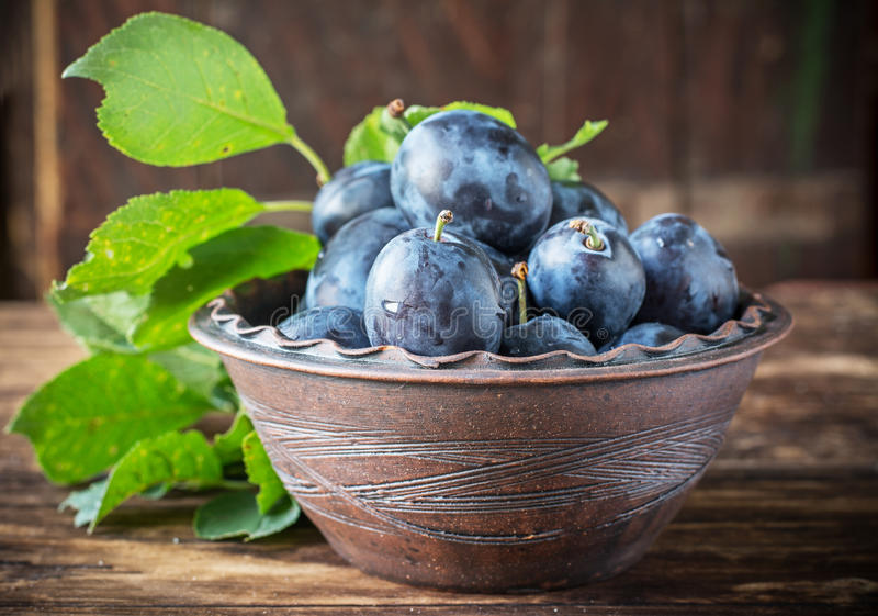Fresh juicy plums with leaves in a ceramic pot on royalty free stock photos
