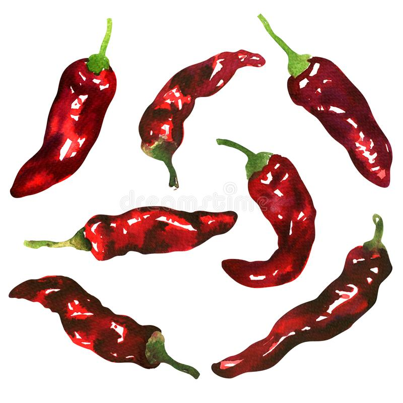 Fresh juicy red hot chili pepper, set of spicy peppers, group of vegetables, chilli cayenne pepper, isolated, hand drawn vector illustration