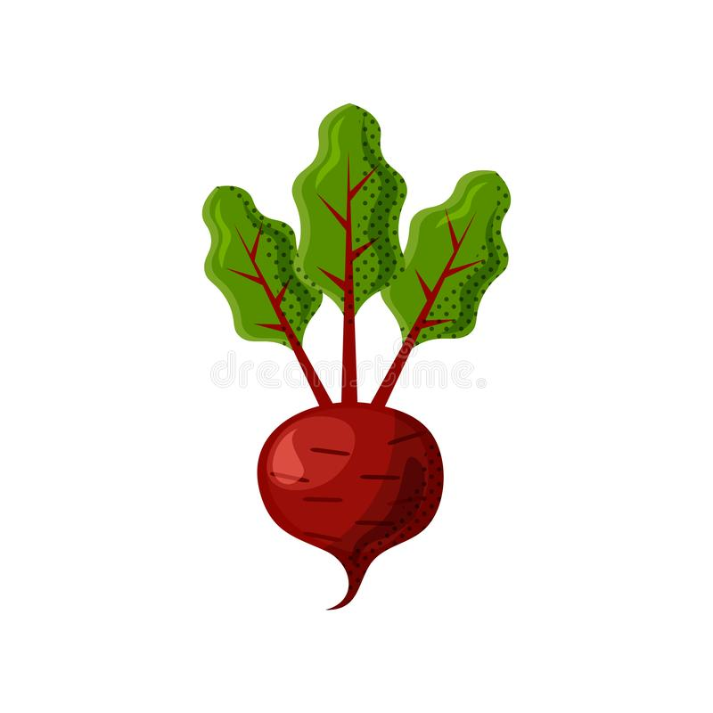 Fresh juicy veg - beet, beetroot vector icon isolated on white background. beetroot icon, flat style, vegetable vector royalty free illustration