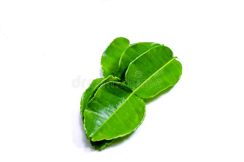 Fresh kaffir lime leaves green leaf isolated on white background royalty free stock image