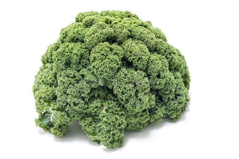 Fresh Kale on white background stock photography