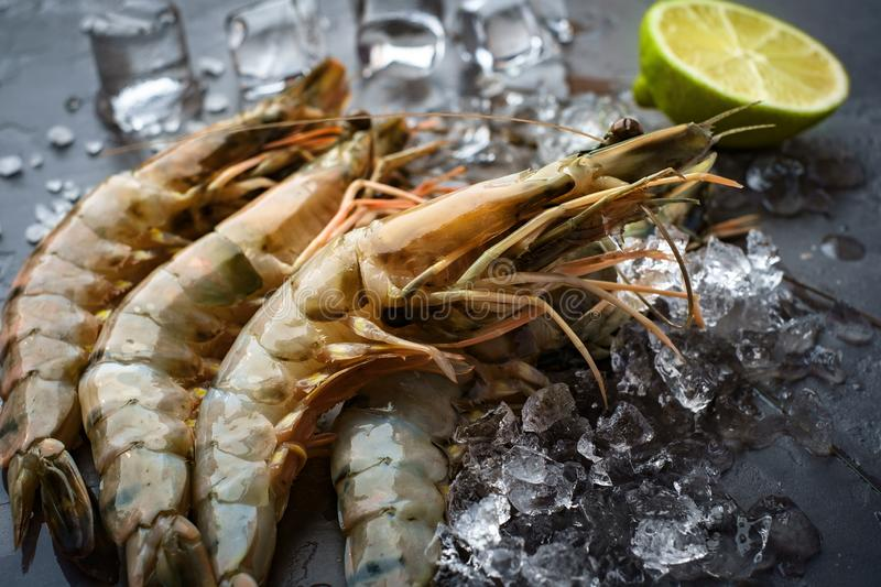 Fresh king prawns on ice on a stone background. King prawns 4 pieces lying on the stone background and the ice black close close-up closeup culinary dark fresh royalty free stock photo