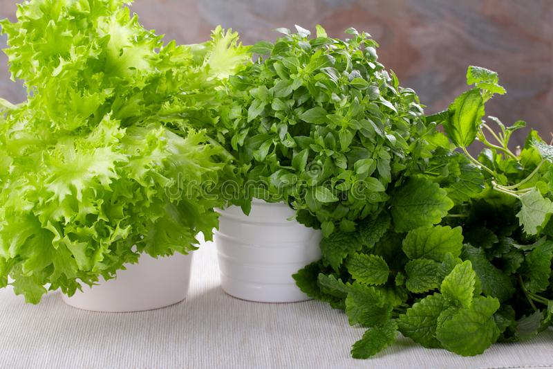Fresh kitchen herbs. Basil, salad and lemon balm stock photos