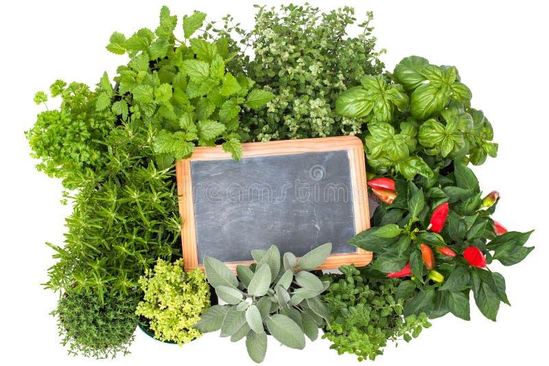 Fresh kitchen herbs stock photography