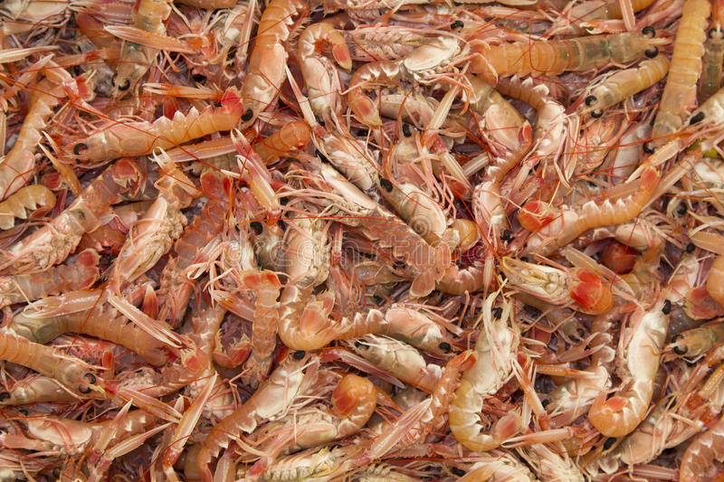 Fresh Kvarner Scampi royalty free stock photos