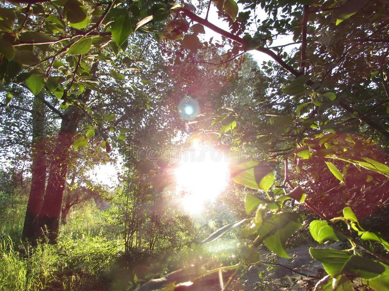 A fresh landscape with bright sunshine with highlights, surrounded by green summer forest branches with leaves. Fresh bright sunny landscape with bright stock photo