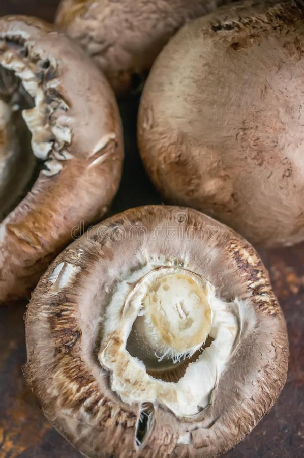 Fresh large Portobello Royal mushrooms with mustard sprouts close-up. Background stock photos