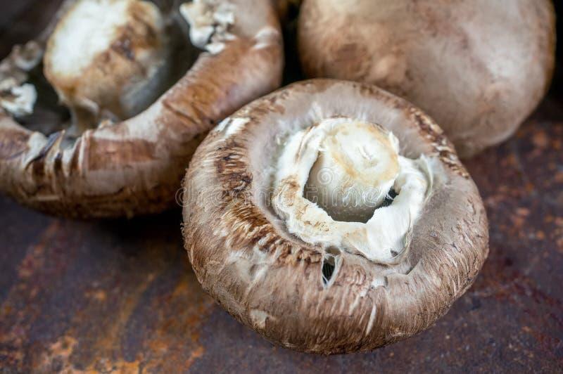 Fresh large Portobello Royal mushrooms with mustard sprouts close-up.  stock photo