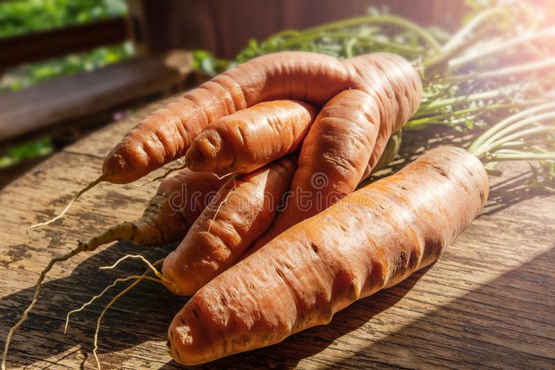 Fresh large red carrots of an unusual form on a wooden table royalty free stock images