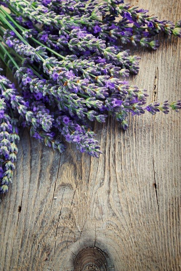 Fresh lavender royalty free stock photos