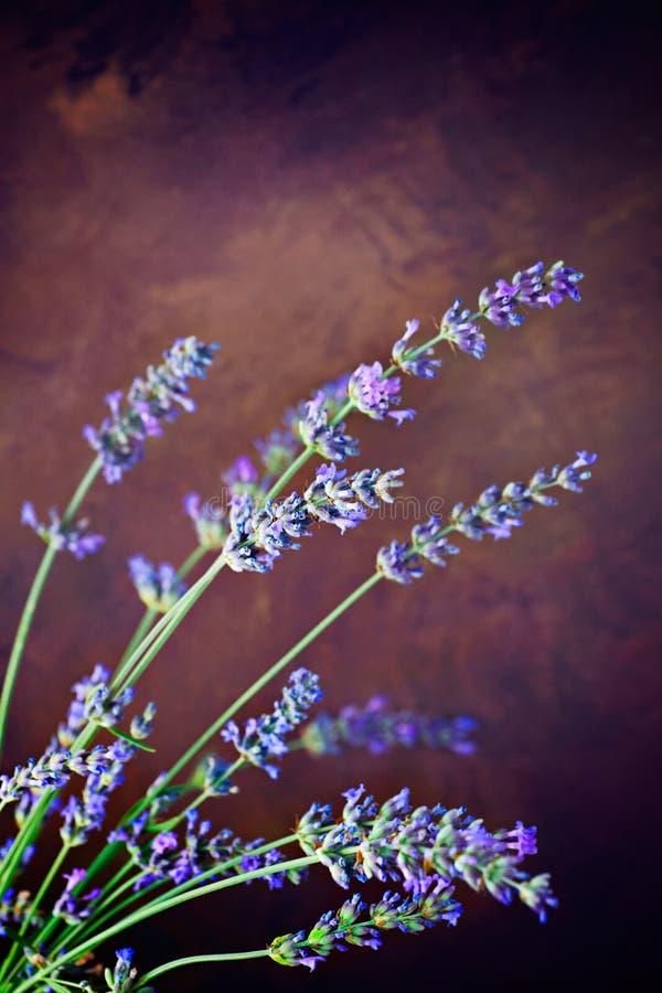 Download Fresh lavender stock image. Image of concept, lavender - 25437861