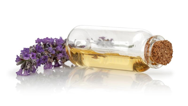Fresh lavender and a bottle of lavender oil royalty free stock photo