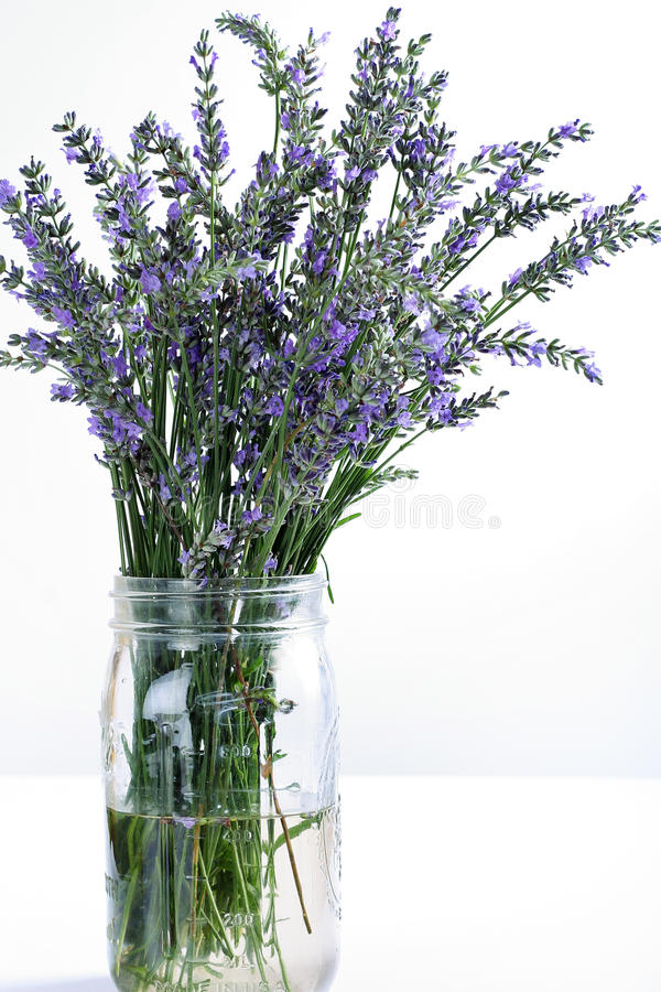 Download Fresh Lavender In Glass Jar On White Vertical Stock Images - Image: 14935364