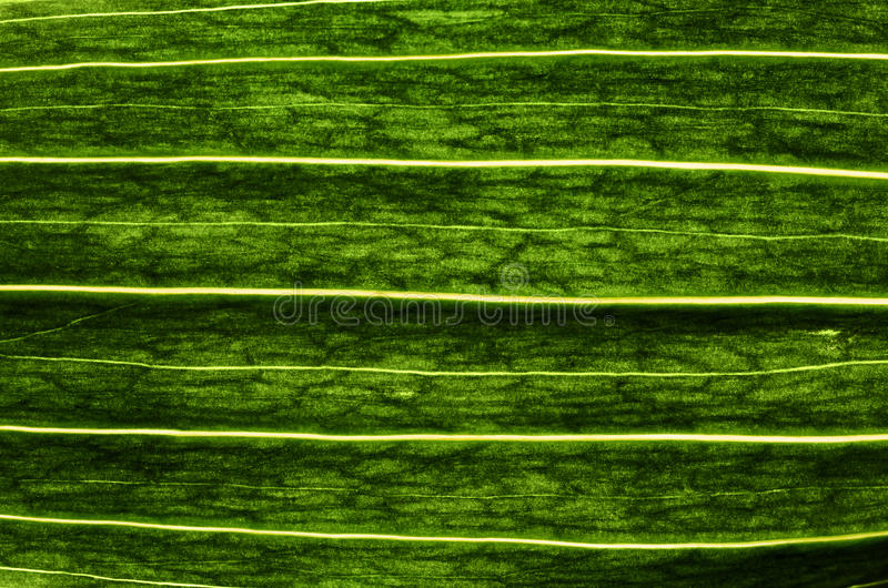 Download Fresh leaf stock photo. Image of green, freshness, meadow - 29345416