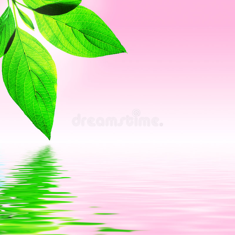 Fresh Leaf, Pink Sky and Water stock image