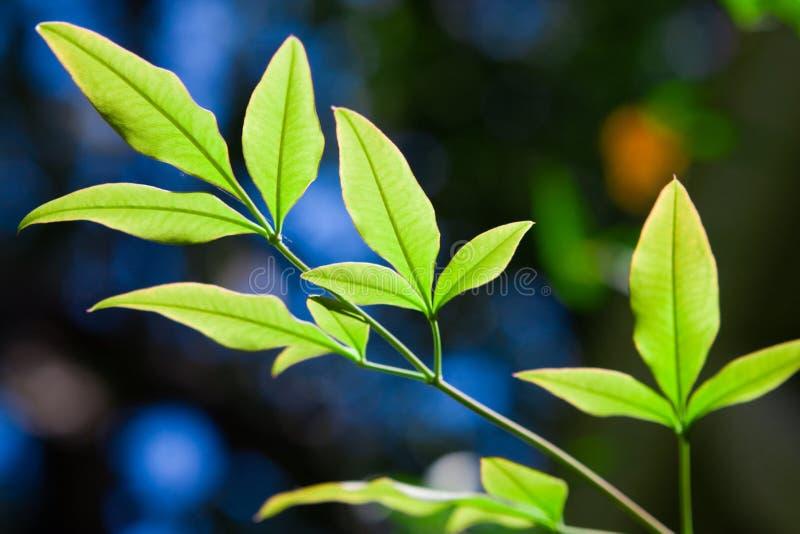 Fresh leaves stock image