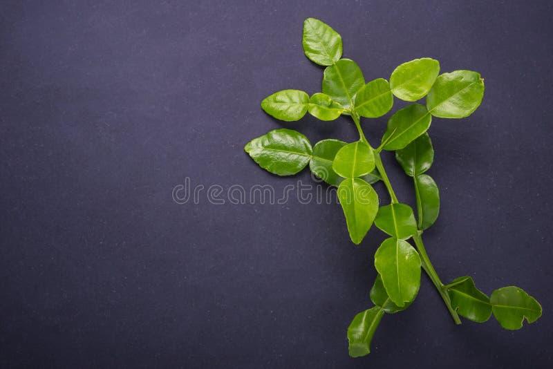 Fresh leaves of Bergamot tree or kaffir lime leaves on black sto stock image