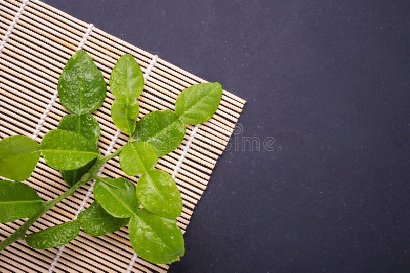 Fresh leaves of Bergamot tree or kaffir lime leaves on black sto stock photos