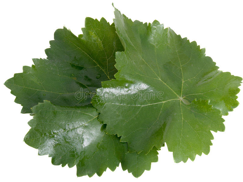 Fresh Leaves Of A Grapes Royalty Free Stock Images