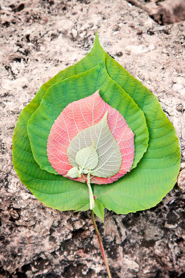 Several Leaves In Tough Natural Environment Royalty Free Stock Photo