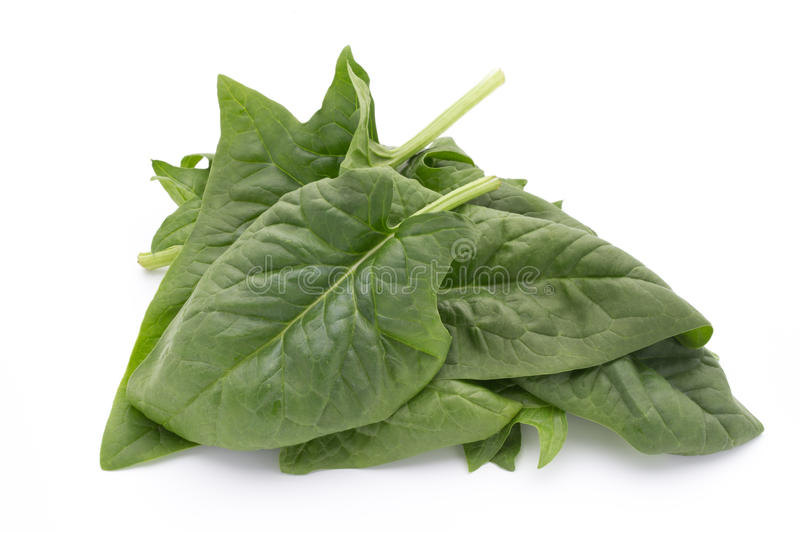 Fresh leaves of spinach on the white background. Green leaves of spinach isolated on white background royalty free stock photography