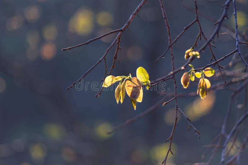 Fresh leaves in the spring stock photography