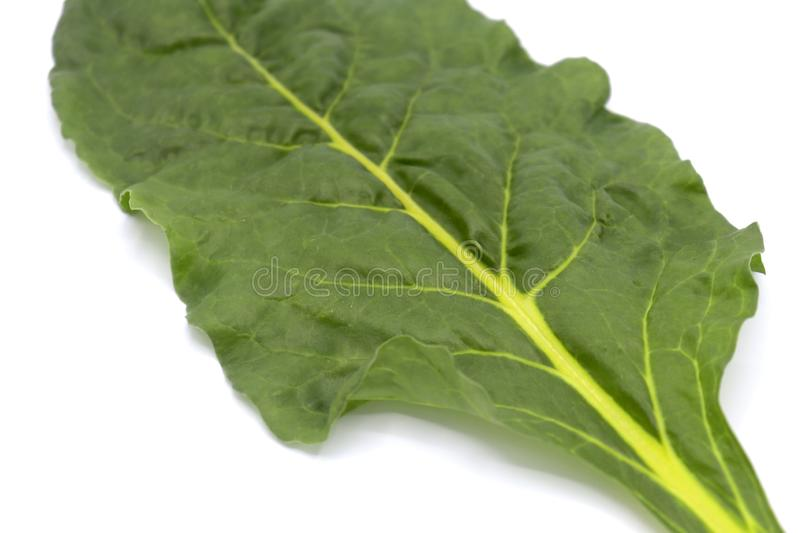 Fresh leaves Swiss Chard or Rainbow Chard vegetable isolate on white backgrund. Chard is distinguishable by the color of the chard. 's stems. The stems stock image