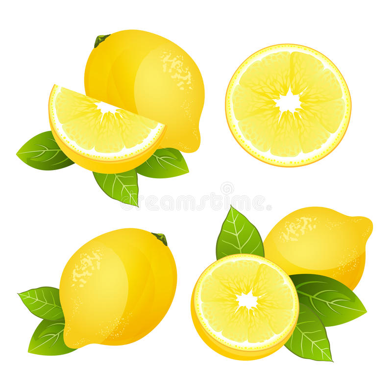 Fresh lemon fruit slice set. Collection of realistic juicy citrus with leaves vector illustration stock illustration