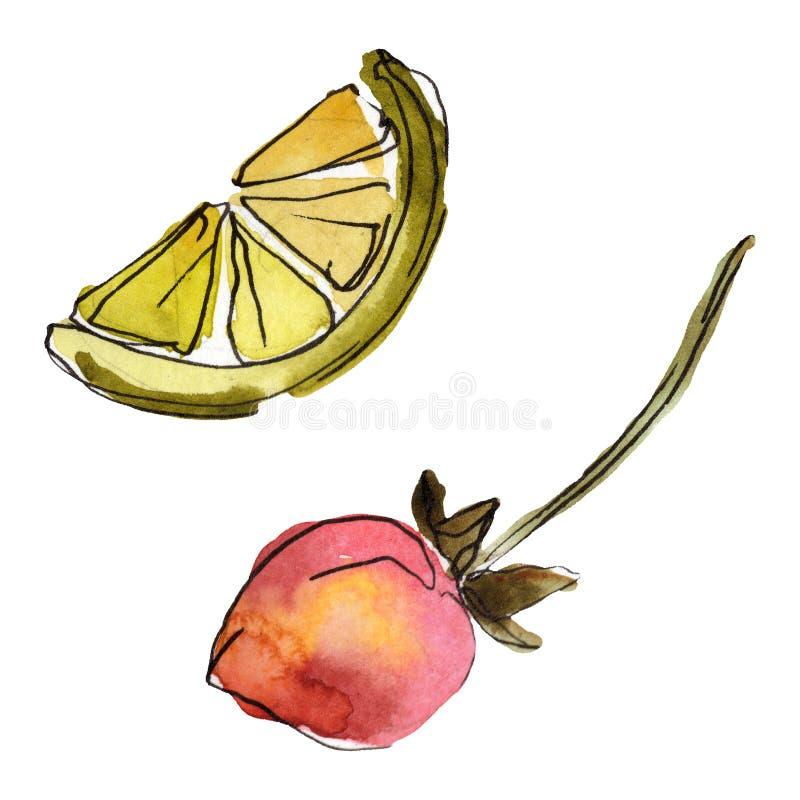 Fresh lemon fruit and strawberry. Watercolor background illustration set. Isolated desserts illustration element. Fresh lemon fruit and strawberry. Watercolor stock illustration