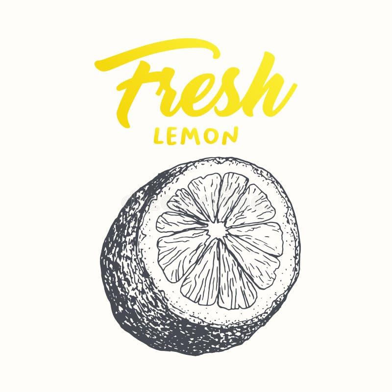 Fresh lemon vector banner design. Fresh lemon vector banner template. Sketch fruit clipart. Sliced lemon engraving style drawing. Handwritten calligraphy stock illustration