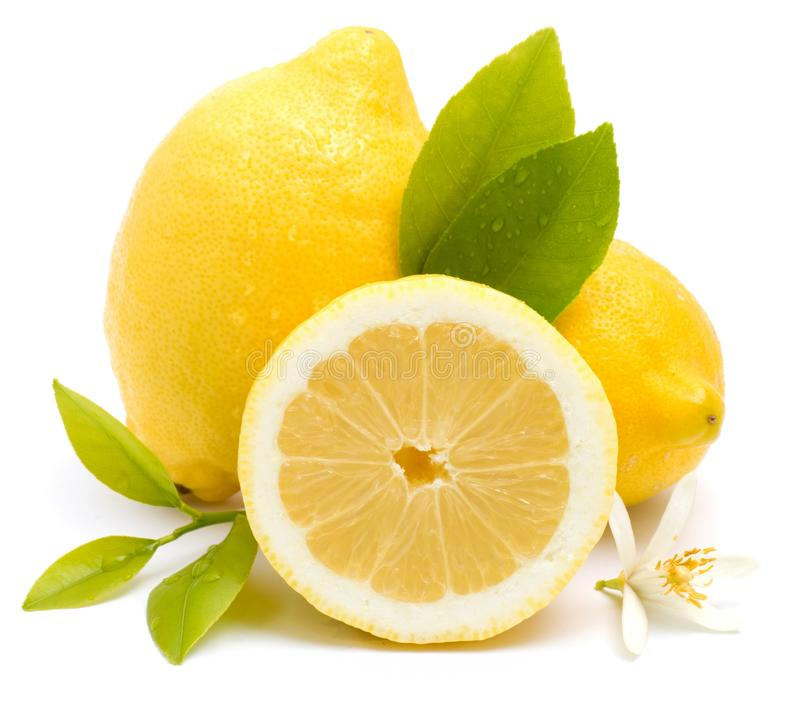 Download Fresh lemons stock photo. Image of vitality, citrus, flower - 26099912