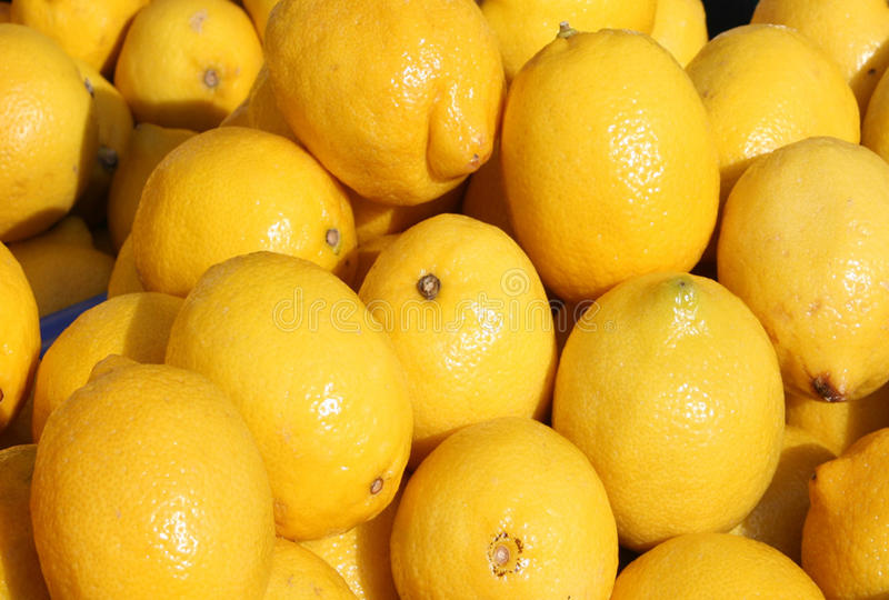 Fresh Lemons. Can make good lemonade.  right from the trees royalty free stock photo